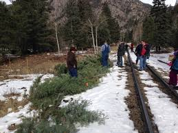 Christmas Tree Species For by All Aboard The Christmas Tree Train Fac Fire Adapted