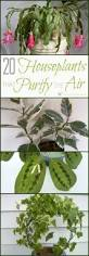 Best Plant For Bathroom by Best 25 Air Cleaning Plants Ideas On Pinterest Apartment Plants