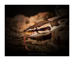 Snake Skin Shedding Lucky by The World U0027s Best Photos Of Scales And Skin Flickr Hive Mind