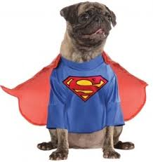 Halloween Express Wichita Ks Hours by Wichita Pug Meetup You U0027re Addicted To Pugs