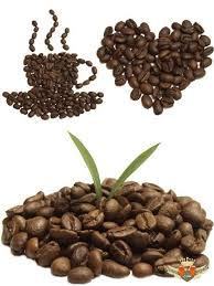 Coffee Beans On A Transparent Background