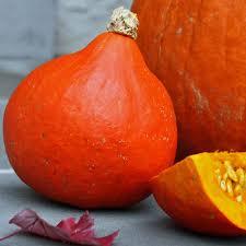 Organic Pumpkin Seeds Australia by Australian Seed Pumpkin Red Kuri
