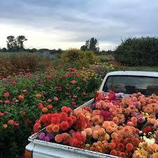 Truck Full O Flowers