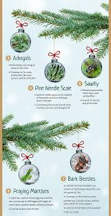 Best Kinds Of Christmas Trees by Common Christmas Tree Bugs And How To Get Rid Of Them