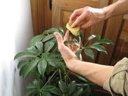 plantes vertes d interieur jardinage en mai plantes vertes et travaux divers