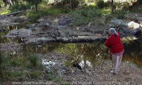 100 Lerderderg State Park Blackwood Victoria Australia River Crossing