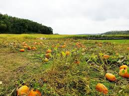 Best Pumpkin Patch Madison Wi by Travel Blog Madison Wisconsin U2013 Give Me Meatloaf