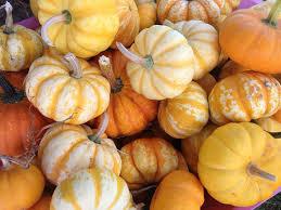 Pumpkin Patch Topeka Ks by Pumpkins 88136463 B3ac 4e38 841bade044826e52 0b45a565 8229 447f A149a6358386539e Jpg