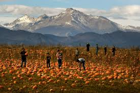 Denver Area Pumpkin Patches by Photos Rock Creek Pumpkin Patch And Corn Maze U2013 The Denver Post