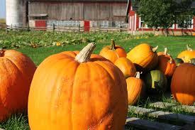 Lane Farms Pumpkin Patch by Pumpkin Patches Fall Travel Series U2013 Katie Jane Interiors