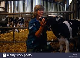 On Soft Straw Of A Farm Barn Lady Vet Diana Stapleton Checks A ... Professional Senior Vet Standing Near Calves Barn In Livestock Veterinary Skills Center Lincoln Memorial University About Us Meadowridge Hosp Groton Ny Red Hospital Vetenarian Dahlonega Ga Usa Houses Missing Family House Old Wooden Shed Pine Path Photo Gallery Mccmaple Woods Tech Hosts Successful Haunted Farmer And Vet With Turkey In Barn Stock Royalty Free Image Midsection Of Female Examing Horse At Project 365 Day 16 Vintage Emily Carter Mitchell Sugar Factory Clinic Horse Stethoscope Photos