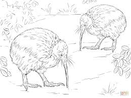 Click The North Island Brown Kiwi Coloring Pages To View Printable
