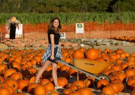 Tapia Brothers Pumpkin Patch by The Best Pumpkin Patches Around La Chelsea Robinson Real Estate