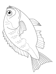 Fish Coloring Pages Bream