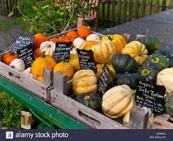 Varieties Of Pumpkins Uk by English Squash Varieties On Display For Sale With Blackboard