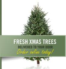 Fraser Fir Christmas Trees Delivered by Christmas Trees Wholesale And Retail