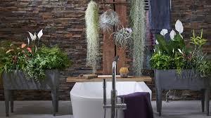 zimmerpflanzen des monats mai 2019 badezimmerpflanzen