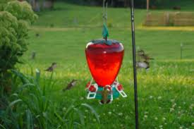 Where To Hang Your Hummingbird Feeder Diy Small Backyard Ideas Archives Modern Garden Recent Blog Posts Move Smart Solutions Blog Drone Defence Vr Gear Sneaky Flying Drones Want To Snoop Your Backyard Bkeepers Are Buzzing Wlrn Defend Territory In Turret Defense Game How Ppare Your Survive Winter Readers Digest June 2015 Thegenerdream Weeds Honey Bees Love My Adventures Bkeeping Buzzing Abhitrickscom 25 Ways To Seriously Upgrade Familys 13 Things Landscaper Wont Tell You Spring Is With Bees Rosie The Riveters