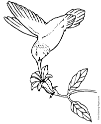 Fresh Bird Coloring Pages Free Awesome Design Ideas