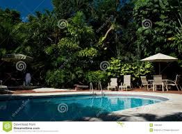 Backyard Pool With Palm Trees Stock Photos - Image: 7635043 Front Yard Landscaping With Palm Trees Faba Amys Office Photo Page Hgtv Design Ideas Backyard Designs Wood Above Concrete Wall And Outdoor Garden Exciting Tropical Pools Small Green Grasses Maintenance Backyards Cozy Plant Of The Week Florida Cstruction Landscape Palm Trees In Landscape Bing Images Horticulturejardinage Tree Types And Pictures From Of Houston Planting Sylvester Date Our Red Ostelinda Southern California History Species Guide Install