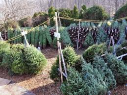 Fortunoff Christmas Trees 2013 by Where To Get A Christmas Tree In And Near Smithtown Smithtown