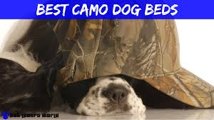 Bowser Dog Beds by Have You Seen The Best Camo Dog Beds Pun Intended Pet Lovers