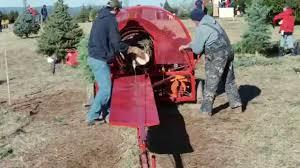 Baler Big Tree At Middleburg Christmas Farm In Virginia