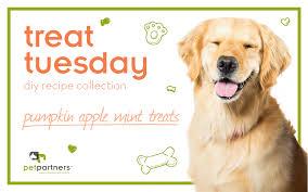 Pumpkin Puree For Dog Constipation by Treat Tuesday Pumpkin Apple Mint Treats Pet Partners Usa