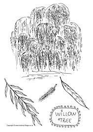 Willow Tree Colouring Page