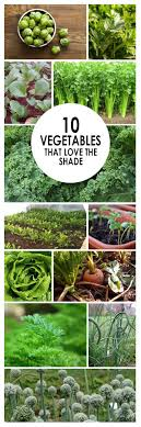 Best 25+ Backyard Vegetable Gardens Ideas On Pinterest | Vegetable ... 38 Homes That Turned Their Front Lawns Into Beautiful Perfect Drummondvilles Yard Vegetable Garden Youtube Involve Wooden Frames Gardening In A Small Backyard Bufco Organic Vegetable Gardening Services Toronto Who We Are S Front Yard Garden Trends 17 Best Images About Backyard Landscape Design Ideas On Pinterest Exprimartdesigncom How To Plant As Decision Of Great Moment Resolve40com 25 Gardens Ideas On