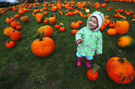 Best Pumpkin Patch Snohomish County by Get Ready For Halloween At Seattle Area Pumpkin Patches Corn