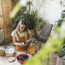 jungle wohntrend pflanzen tipps für jedes zimmer