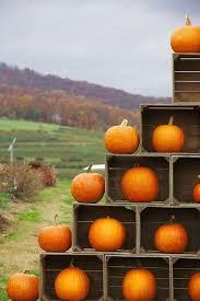 Dills Pumpkin Patch Columbus Ohio by 227 Best Pompoenendecoraties Images On Pinterest Dallas