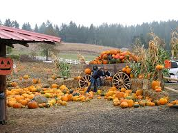 Roloff Pumpkin Patch by How Much Does A Roloff Farm Wedding Cost Howmuchisit Org