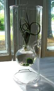 water terrarium large glass bowl porch and patios