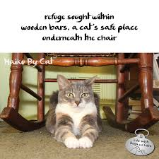 Haiku By Cat: Refuge : Life With Dogs And Cats