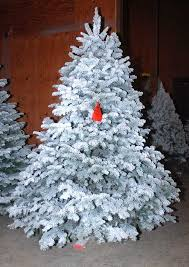 Youll Find Beautiful Christmas Trees At Little Hills Farm In