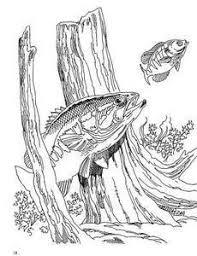 Bass Fishing Coloring Book