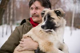 Large Dogs That Dont Shed Fur by Dogs Comfort The Bereaved In Funeral Homes Sevenponds