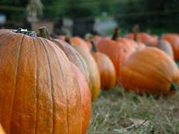 Best Pumpkin Apple Picking Long Island Ny by Apple Picking At Masker Orchards Warwick Ny