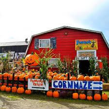 Ms Heathers Pumpkin Patch Address by Foster U0027s Produce U0026 Corn Maze Home Facebook