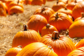 Best Pumpkin Patch Minneapolis by Happy National Pumpkin Day
