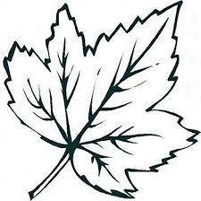 Small Leaves Coloring Pages For Kids Printable