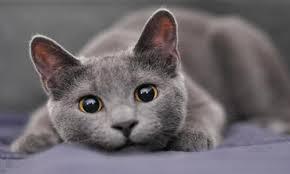 russian cat names and cool cat bird fish rabbit pet names part 2