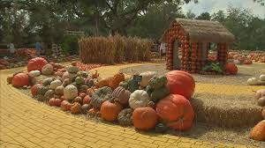 Pumpkin Patch Fort Collins by Sam U0027s Weekend Deals Dfw Pumpkin Patches Nbc 5 Dallas Fort Worth