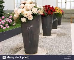 Articles with Flower Vases for Sale Tag Big Vase L Vasei 0d Uk