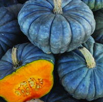 Cinderella Pumpkin Seeds Australia by Pumpkin And Winter Squash Seeds To Buy In The Uk From The Real