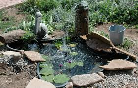 White-wing Doves Evolving   Fat Finch — Backyard Birds, Birding ... Frog Lodge Gabe Feathers Mcgee The Whisper Folks How To Create A Wildlife Pond Hgtv Building Ogfriendly Build On Budget Youtube Backyard Home Landscapings Ideas Garden Diy Project Full Video To Make Chickadee Habitat Design And Build Wildlife Pond Saga For Frogs Part 5 Outdoor Patio Cute Round Koi Mixed With