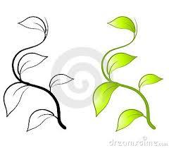 leaf vine clipart pumpkin vine drawing pumpkin vine clipart ivy png zrwfhz clipart