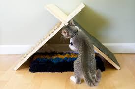 modern cat make a cat tent for your pet hgtv